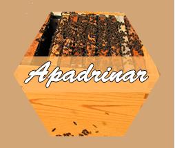 apadrinar.png