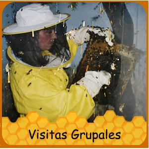 visitasgrupales.png